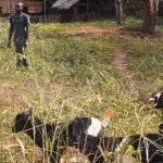 A Potential of Goats and Chickens among the Baka