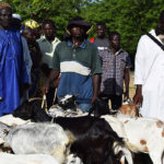 Donations of Sheep and Goats to Disaster Victims